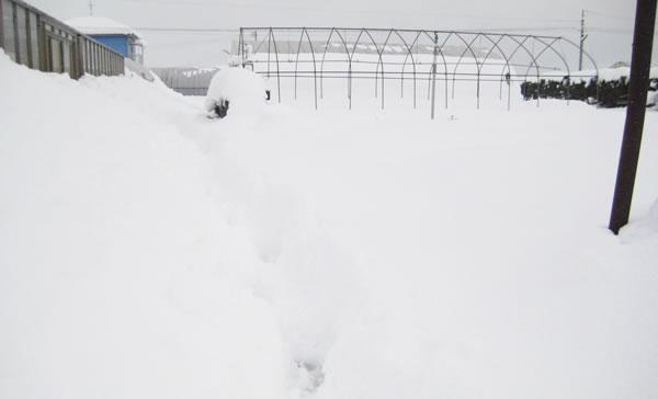 27年ぶりの大雪!!