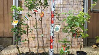 柑橘類、あんず、りんご、柿、葉さんしょう、ラズベリーなどの本日の発送苗