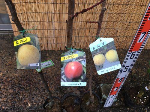 梨、ネクタリン、アンズ、柑橘類、タラの木などの本日の発送苗