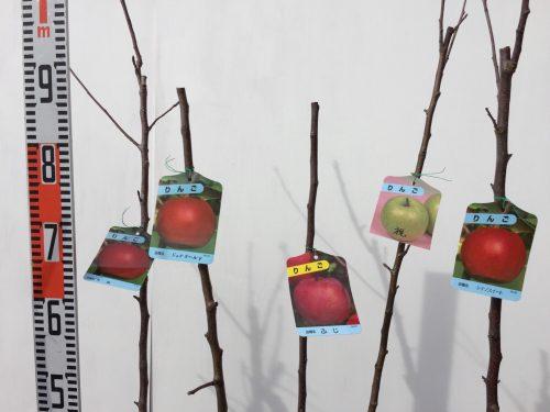 梅、プルーン、リンゴなどの本日の発送苗