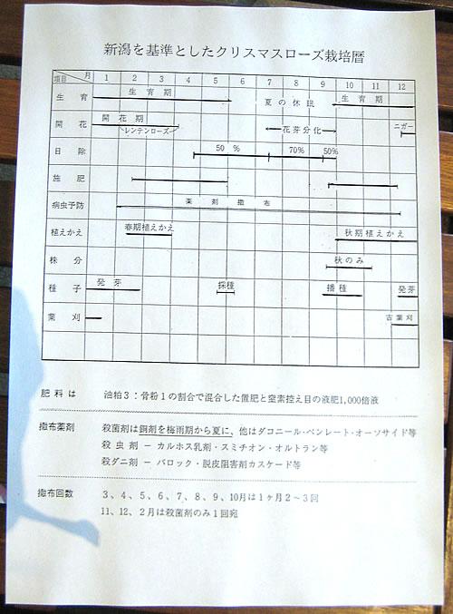 クリスマスローズフェスタ クリスマスローズ講演会 part2